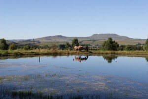Elgin Guesthouse - Horse Riding - Underberg