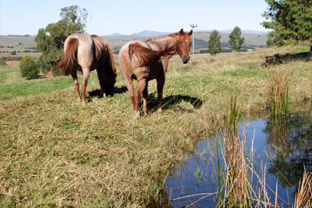 drakensberg mountains horseback riding